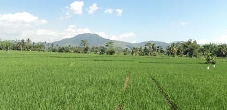 apa pertanian sehat