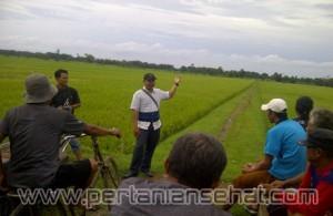 Program Pemberdayaan Petani Dhuafa