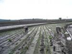 aplikasi-alat-pertanian-sendiri