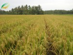 bg-pertaniansehat-2013.jpg
